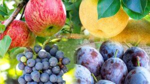 秋の果物の画像